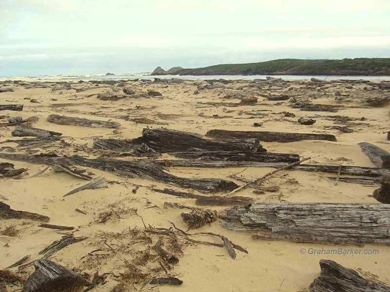Driftwood on a large scale at the mouth of the Pieman River, Tasmania