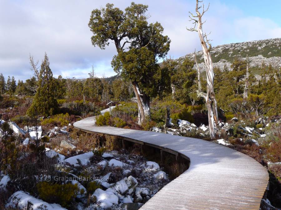 Frost on the boardwalk, Pine Lake, Tasmania