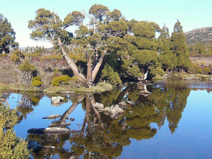 Pencil pine reflections, Pine Lake, Tasmania
