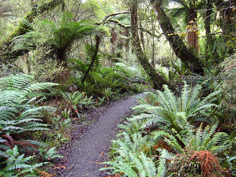 Path through forest on the Rakiura Track, Stewart Island, New Zealand
