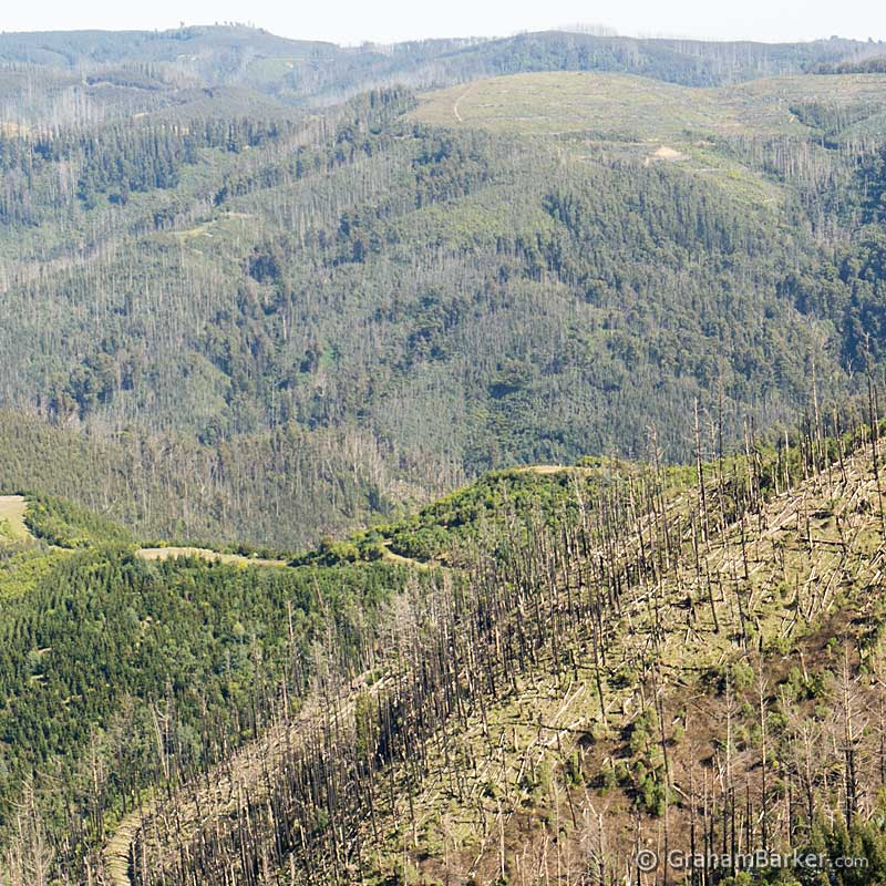 Some of the logging country which surrounds Tarra Bulga National Park, Victoria